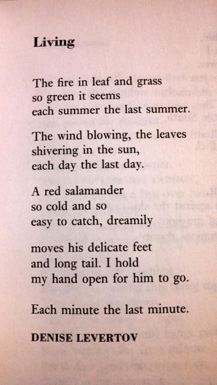 poetry , poem ,poet