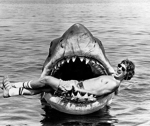 Jaws, shark